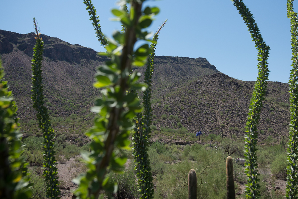 Migrants' bodies found near Ajo & Arivaca; Officials left other remains in desert cave for 16 months