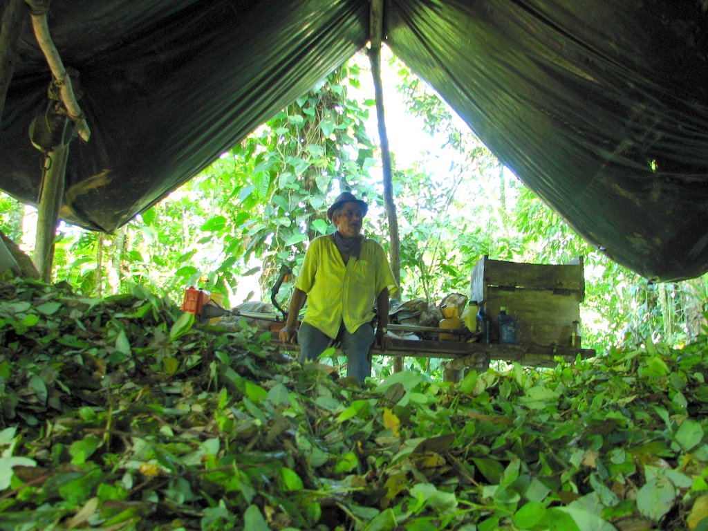 war on drugs in colombia Bogota, colombia — the annual united nations survey on coca plant production in the andean region serves as a kind of drug war report card — yet it's hard to tell whether colombia is passing.