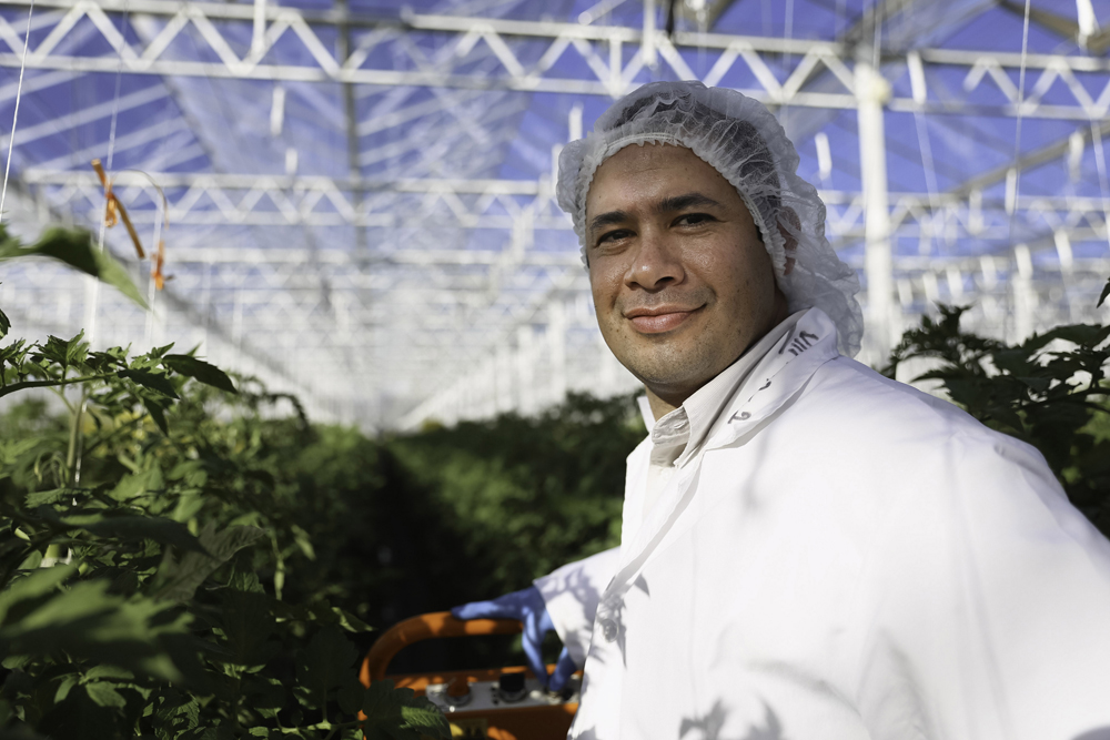 Wholesum General Manager Francisco Landell in one of the greenhouses he oversees in Immuris, Mexico, where the organic produce company grows tomatoes.