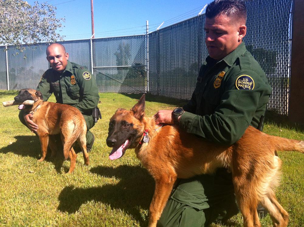Image result for border patrol k9