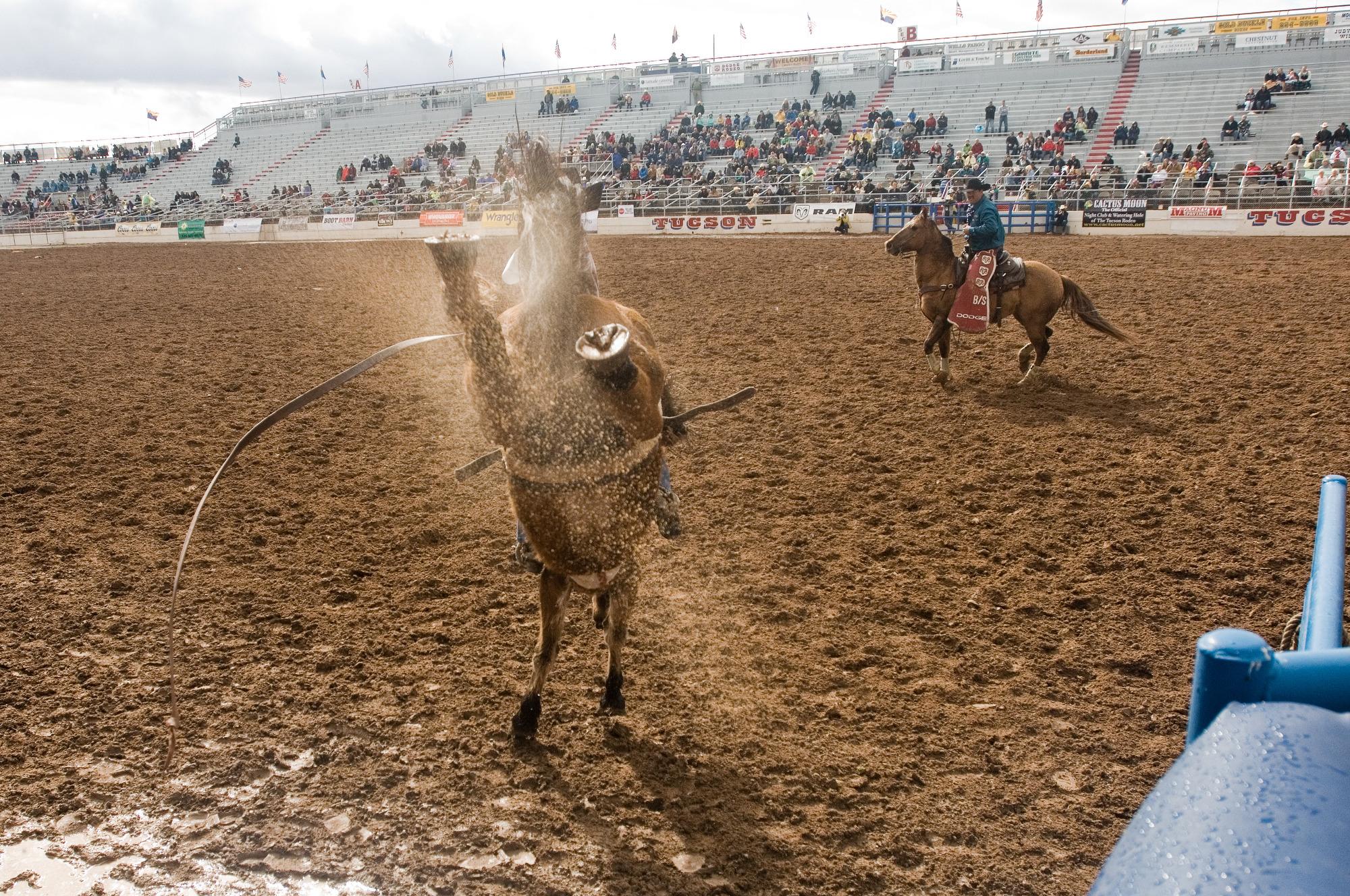 Rodeo Photo Roundup 2010 La Fiesta De Los Vaqueros