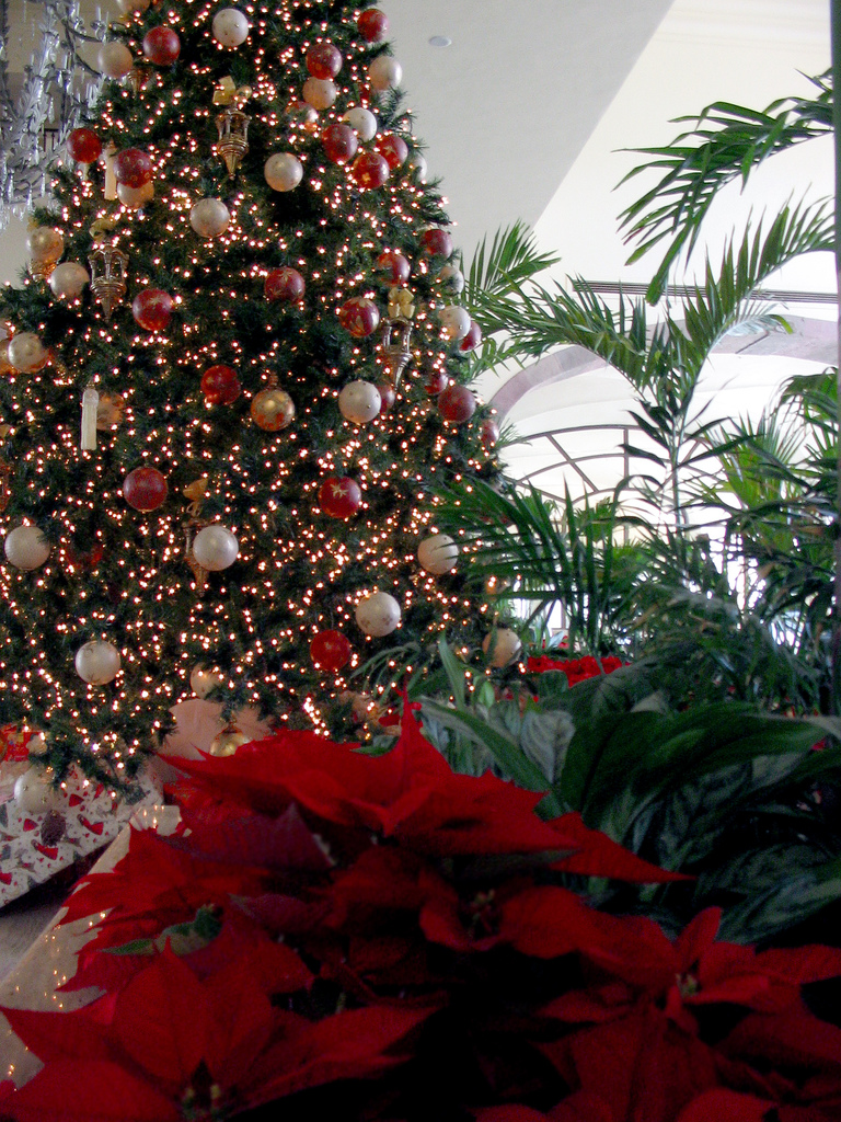 Christmas Inc American Trees Take Over Mexico
